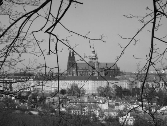 Des nouvelles du chat de Prague
